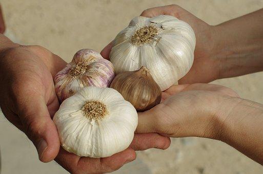 Garlic, Garlic White, Purple Garlic, Black Garlic