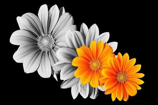 Flowers, Gerbera, Flower, Nature, Plant, Petal, Summer