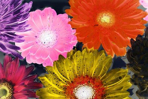 Flower, Flora, Nature, Floral, Petal, African Daisy
