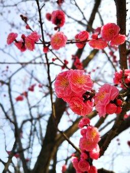 Branch, Tree, Season, Nature