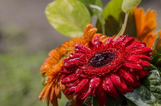 Nature, Flower, Flora, Leaf, Garden, Floral, Summer