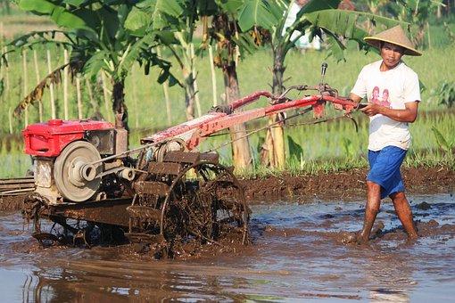 Farmer, Field, Plow Paddy, Rural, Nature, Green, Plant