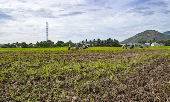 Farm, Paste, Plough, Paddy Field, Home, Page, Write