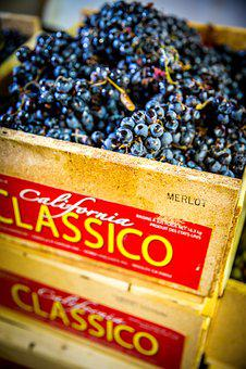 Grapes, Wine, Winemaking, Merlot, Vineyard, Vine
