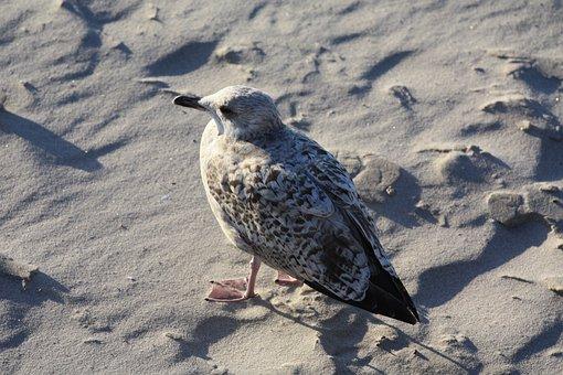 Nature, Bird, Gull, Animal World, Animal, Beach, Sand