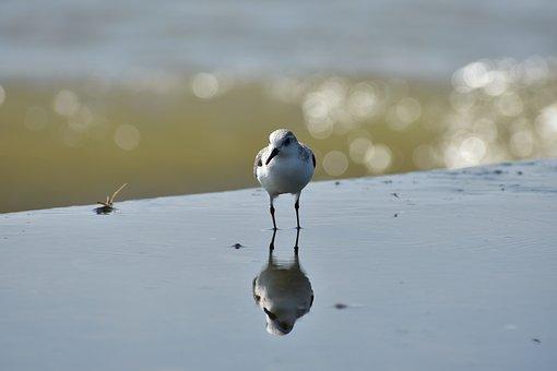 Animal, Sea, Beach, Wave, Bird, Wild Birds
