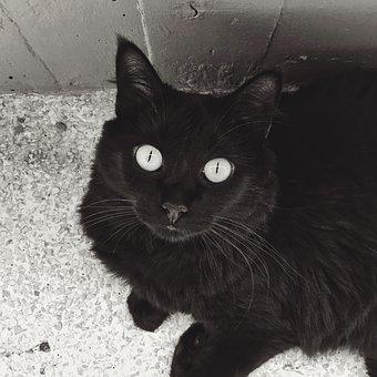 Cat, Portrait, Cute, Mammals, Kitten, Pet, Animalia