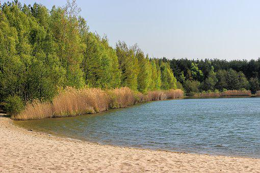 Waters, Nature, Sky, Lake, Landscape, Beach, Reed