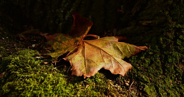 Leaf, Autumn, Light Shadow, Golden Autumn, Fall Foliage