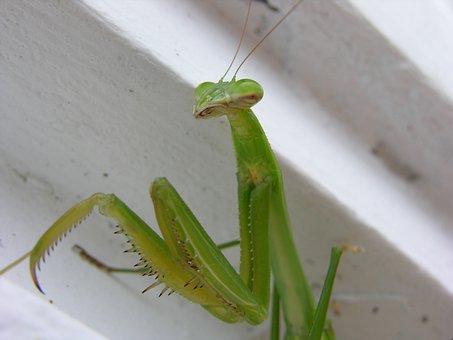 Insect, Invertebrate, Nature, Leaf, Wildlife