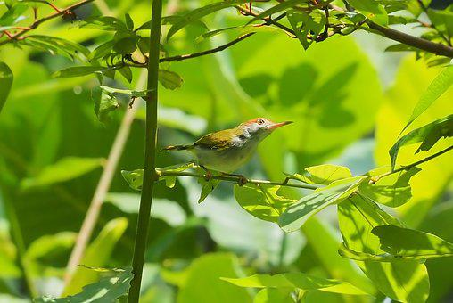 Nature, Leaf, Tree, Outdoors, Flora, Bird, Wildlife