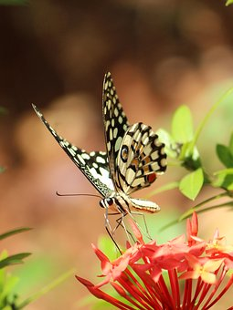 Butterfly, Nature, Insect, Outdoors, Summer, Wing