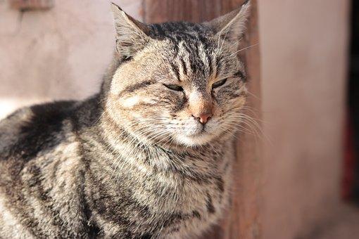 Cute, Animal, Cat, Mammal, Fur, Portrait, Looking