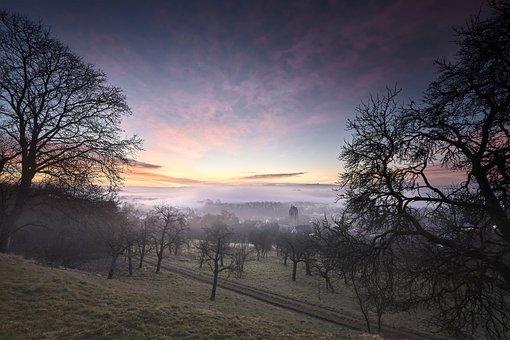 Tree, Dawn, Nature, Landscape, Sunset, Sun, Sky, Light