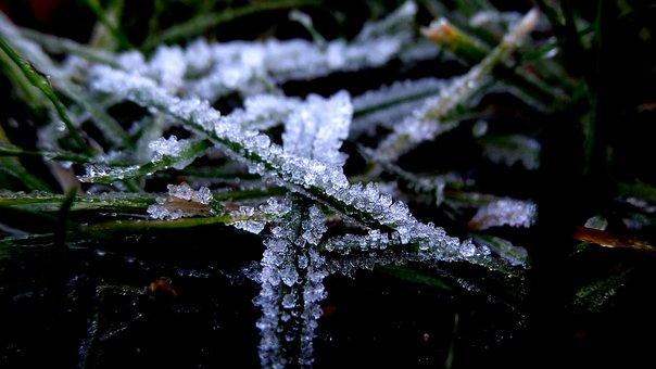Tree, Winter, Nature, Frost, Season, Outdoors, Frozen