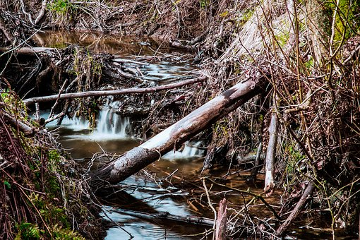 Nature, Waters, Wood, Tree, Leaf, River, Wet, Grass