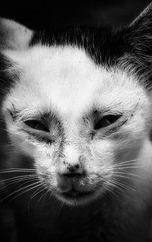 Cat, Mammal, Portrait, Animal, Wildlife, Eye, Carnivore