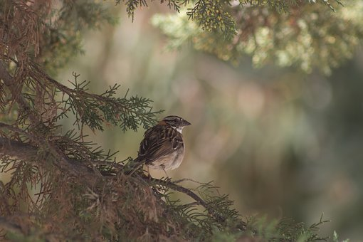 Birds, Nature, Wild Life, Tree, Outdoors, Animalia