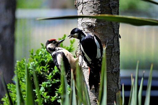Nature, Wildlife, Birds, Outdoor
