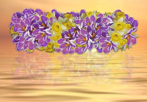 Crocus, Narcissus, Flower, Plant, Floral, Petal