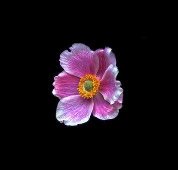 Blossom, Bloom, Flower, Nature, Plant, Petal, Summer