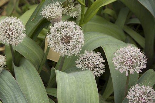 Flower, Nature, Flora, Leaf, Ornamental, Garden, Plant