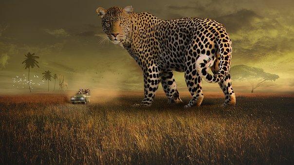 Wildlife, Leopard, Spots, Mammal, Nature, Cat, Outdoors