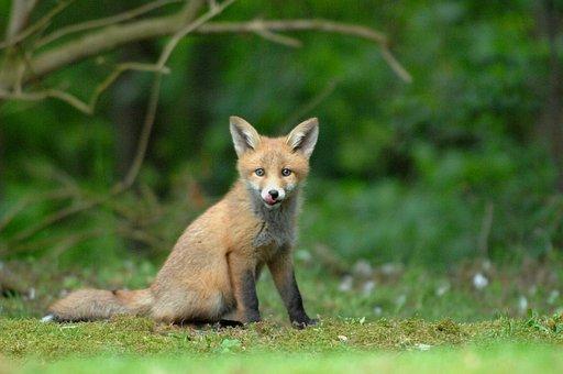 Wildlife, Natural, Expensive, Mammals, Wild, Outdoor