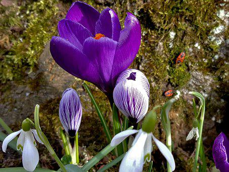Flower, Nature, Plant, Garden, Flowers, Close, Spring