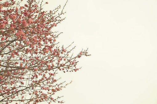 Wood, Quarter, Season, Nature, Plum, Red Plum, Spring
