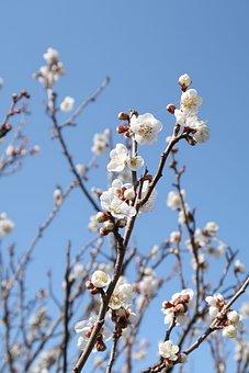 Branch, Wood, Flowers, Seasonal, Plum, Natural