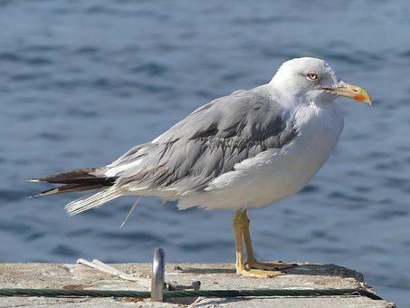 Bird, Animal World, Sea, Seagull, Seevogel, Waters