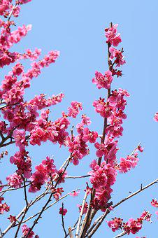 Branch, Flowers, Wood, Blue Sky, Spring, Natural, Plant