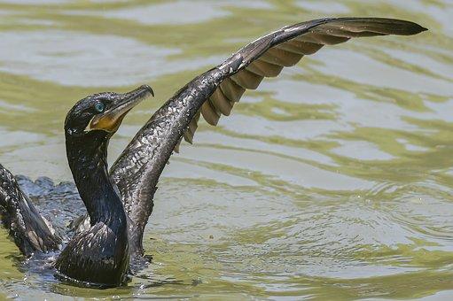 Birds, Wildlife, Body Of Water, Nature