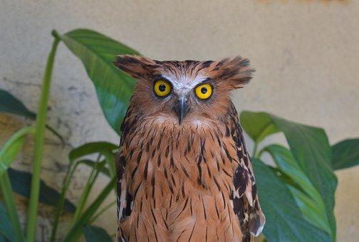 Owl, Bird, Animal, Zoo, Stare