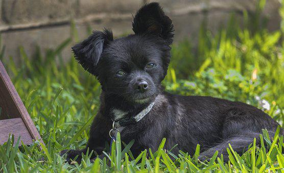 Animal, Grass, Dog, Cute, Mammal, Canine, Little, Puppy