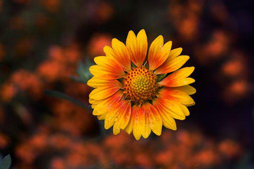 Nature, Flower, No Person, Plant, Outdoor, Color