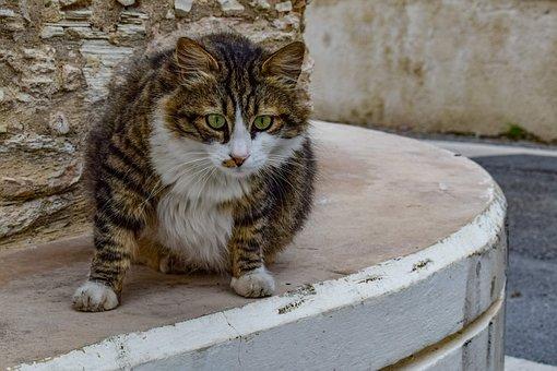 Cat, Stray, Animal, Cute, Curious, Street, Village
