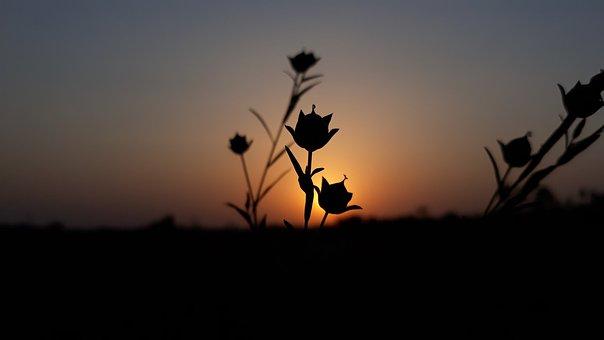 Silhouette, Sunset, Dawn, Nature, Dusk, Backlit, Sky