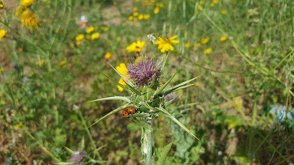 Nature, Flower, Flora, Summer, Field, Wildflower