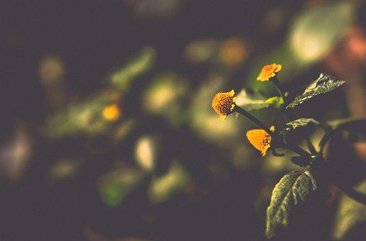 Desktop, Nature, Color, Flower, Flora, Closeup, Leaf
