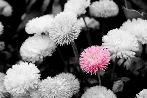 Flower, Flora, Nature, Floral, Garden, Blooming, Season