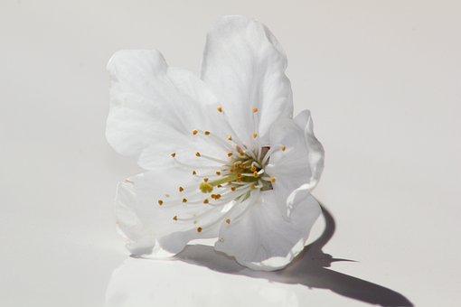 Flower, Nature, Plant, Petal, Close, Flowers, Color