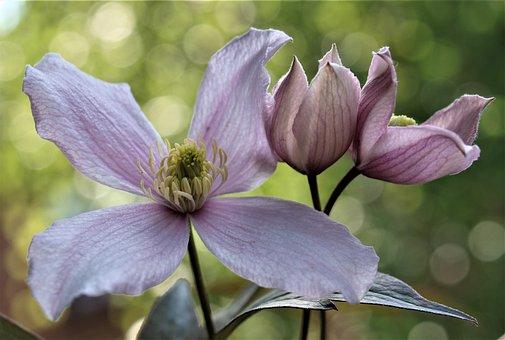 Flower, Nature, Flora, Garden, Blooming