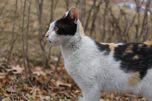 Nature, Animal, Cute, Mammal, Fur, Street Cat