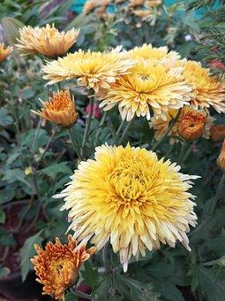 Flower, Flora, Nature, Garden, Petal