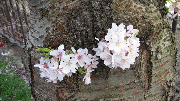 Flower, Nature, Tree, Flora, Season