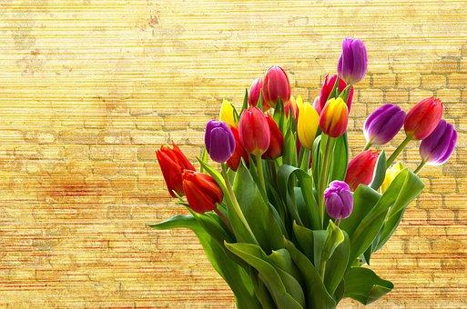Tulip, Nature, Flower, Easter, Plant, Spring, Blossom