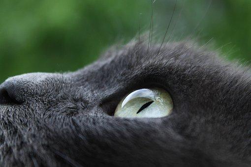 Portrait, Mammals, Animals, Nature, Person, Cat