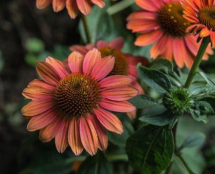 Flower, Gerbera, Plant, Nature, Garden, Petal, Petals